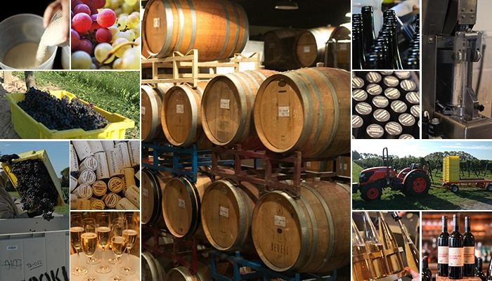 Winemaking Dictionary