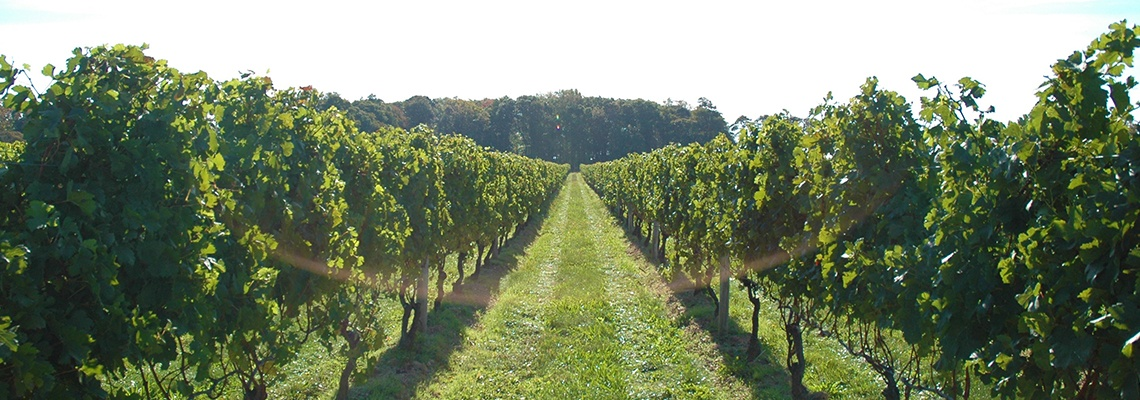 Brooklyn Winery Vineyard View