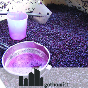 Gothamist | Brooklyn Winery